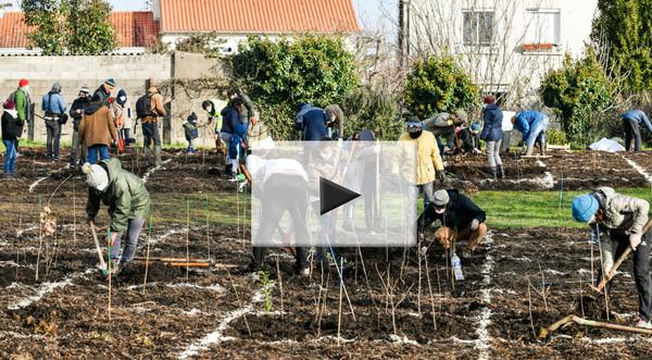 Plantation micro-foret